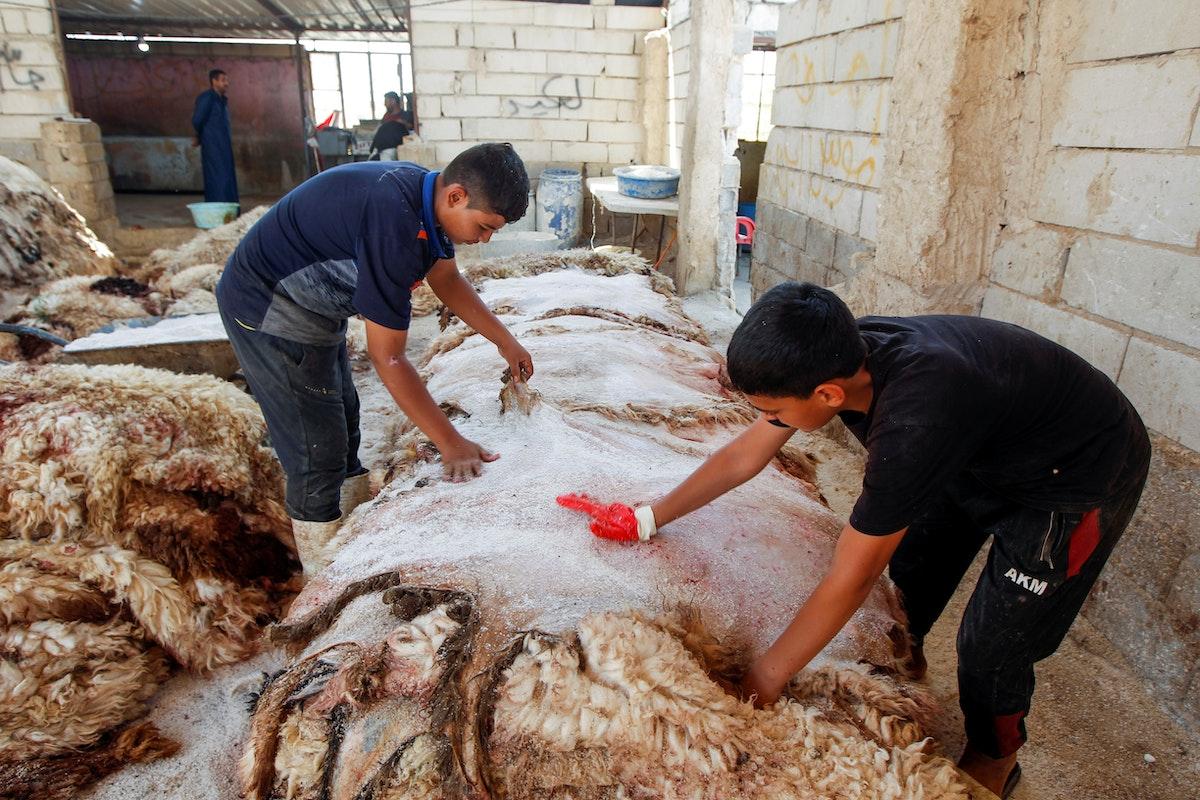 عمال يضعون الملح على جلد الغنم في سوق للماشية في النجف - REUTERS