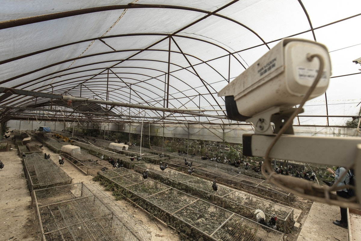 كاميرا لمراقبة الدجاج في مزرعة بمقاطعة فوجيان الصينية - 18 نوفمبر 2020 - Bloomberg