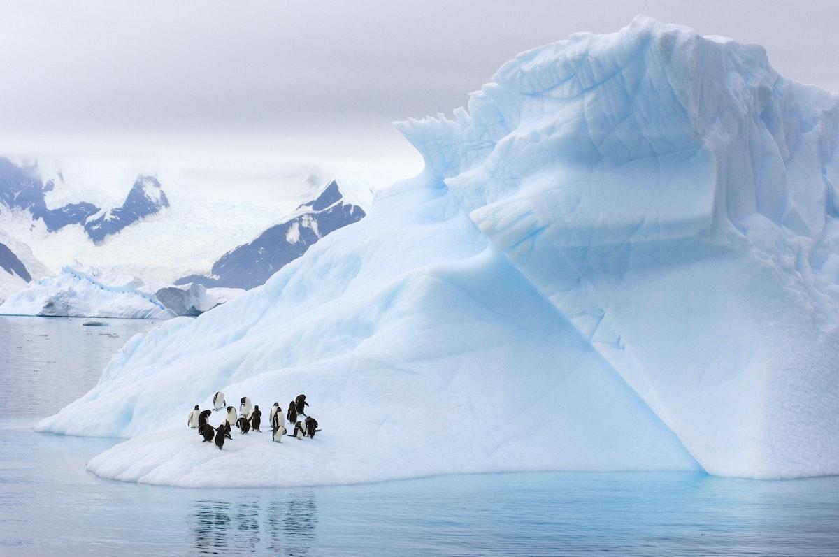 مجموعة من طيور البطريق قرب المياه في  - Getty Images
