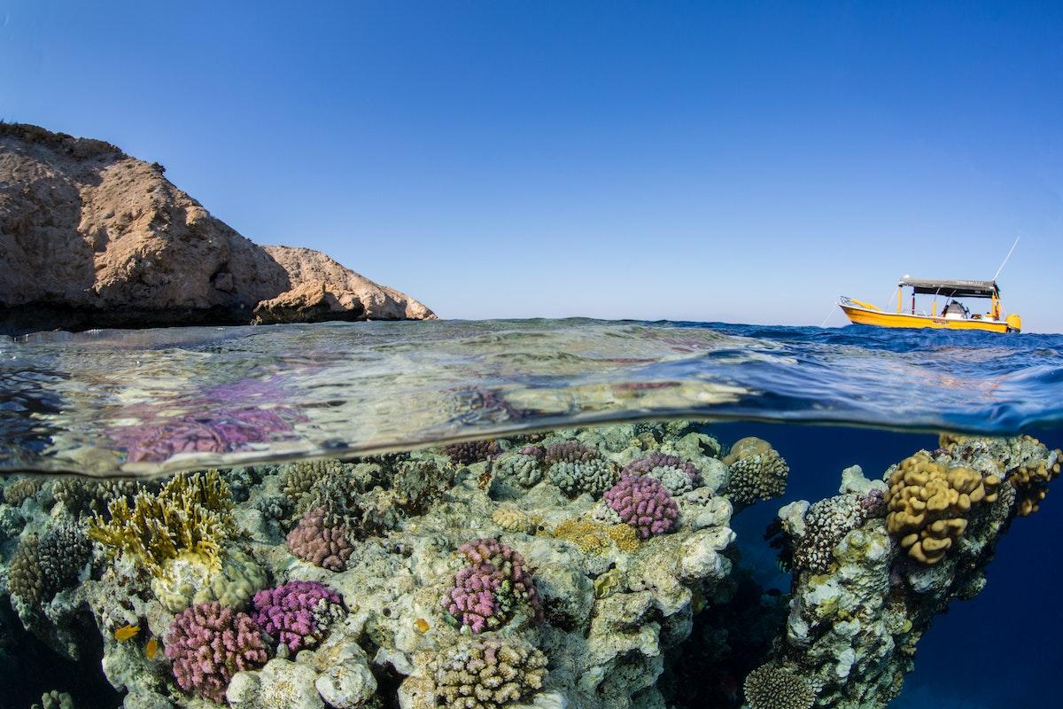 صورة للشعب المرجانية في سواحل مدينة نيوم الساحلية - الشرق