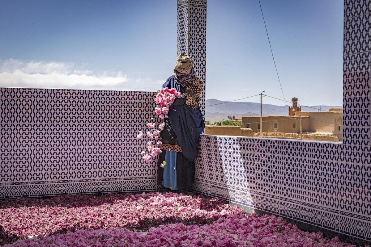 جانية ورد تنثر بتلات ورد الروزا الدمشقية في فناء منزل مخصص لجني محصولهن وفرزه وتسويقه في إقليم تنغير بوسط المغرب 26 أبريل 2021 - AFP