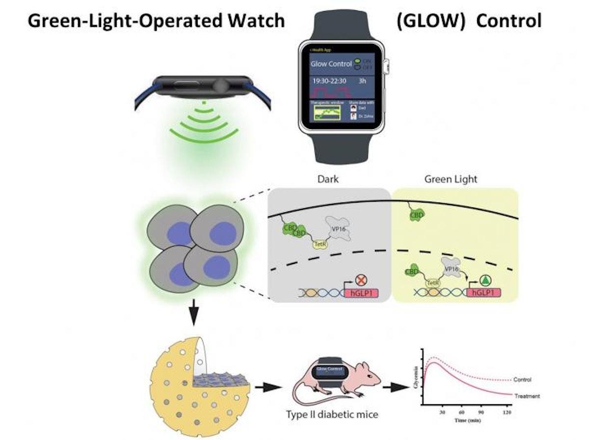 صورة توضيحية لدراسة استخدام الساعات الذكية في التحكم بالجينات وإفراز الأنسولين - معهد ETH السويسري
